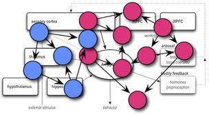 neural pattern